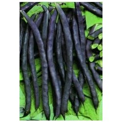 Dwarf French Bean Purple Queen 40 seeds
