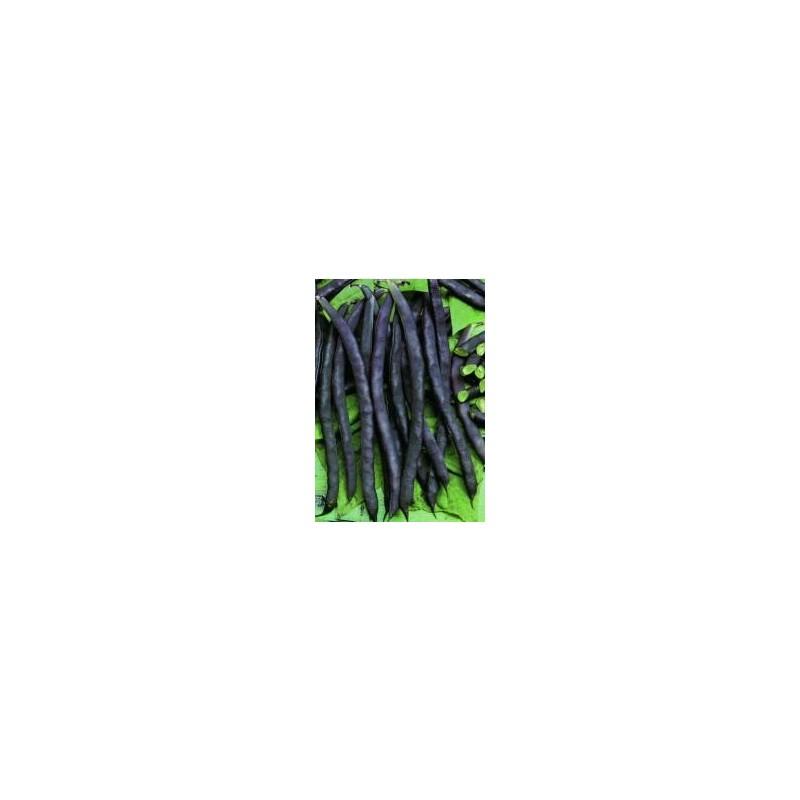 Dwarf French Bean Purple Queen 40 seeds