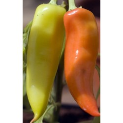 Hot Pepper - Hungarian Hot...
