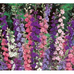 Larkspur Giant Imperial Mix 200 seeds
