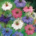 Nigella Jewels Mix 500 seeds