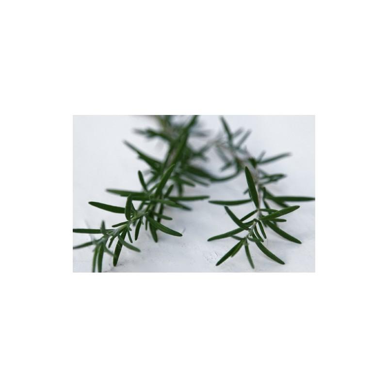 Rosemary 100 seeds