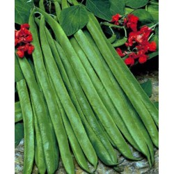 Runner Bean Streamline 25 seeds