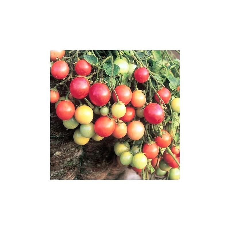 Tomato Garden Pearl 35 seeds