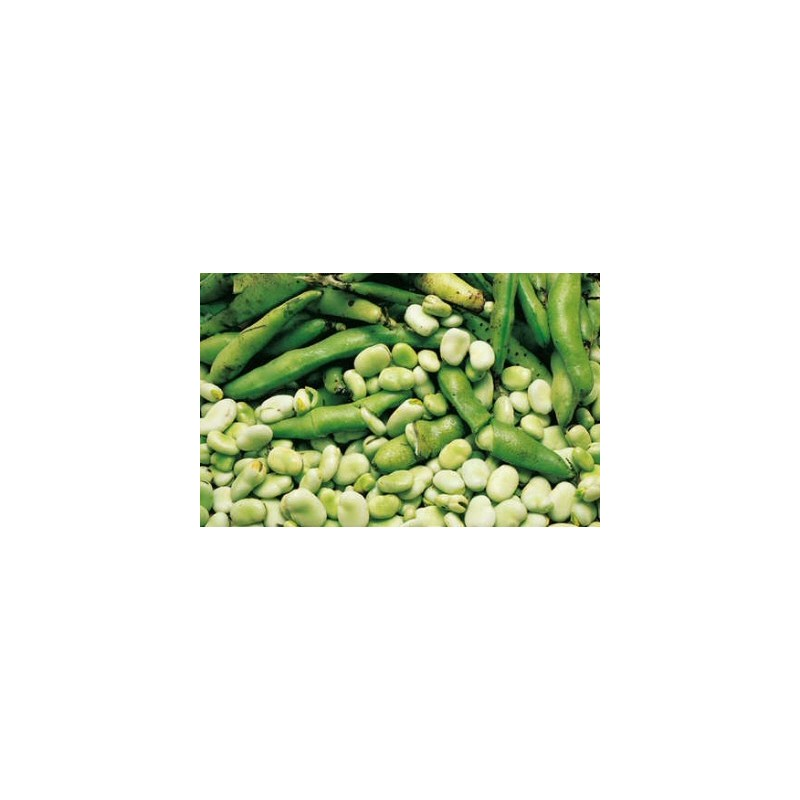 Broad Bean The Sutton Dwarf 50 seeds
