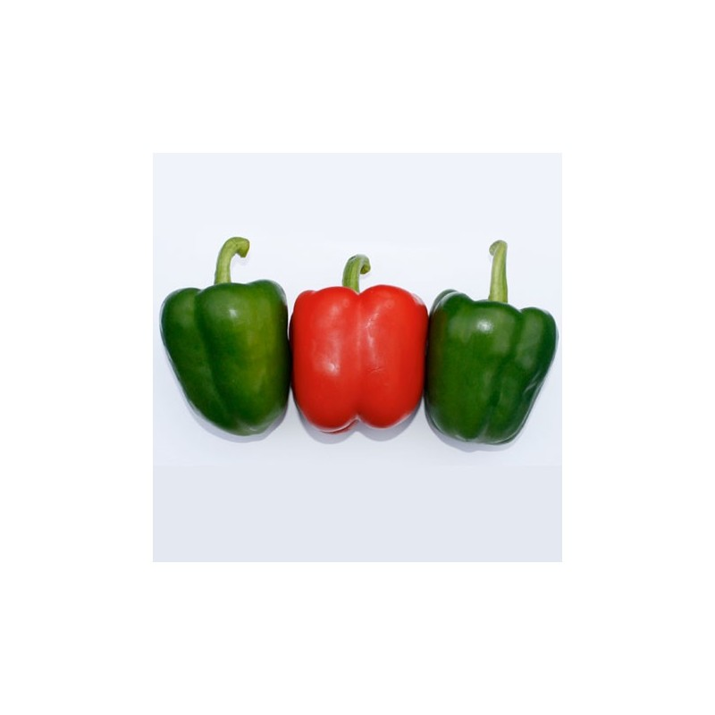 Sweet Pepper - Californian Wonder 50 seeds