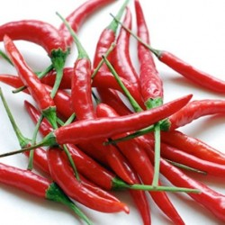 Hot Pepper - Cayenne Red 25 seeds