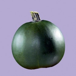 Winter Squash - Little Gem 8 seeds