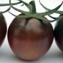 Tomato Black Cherry 100 seeds
