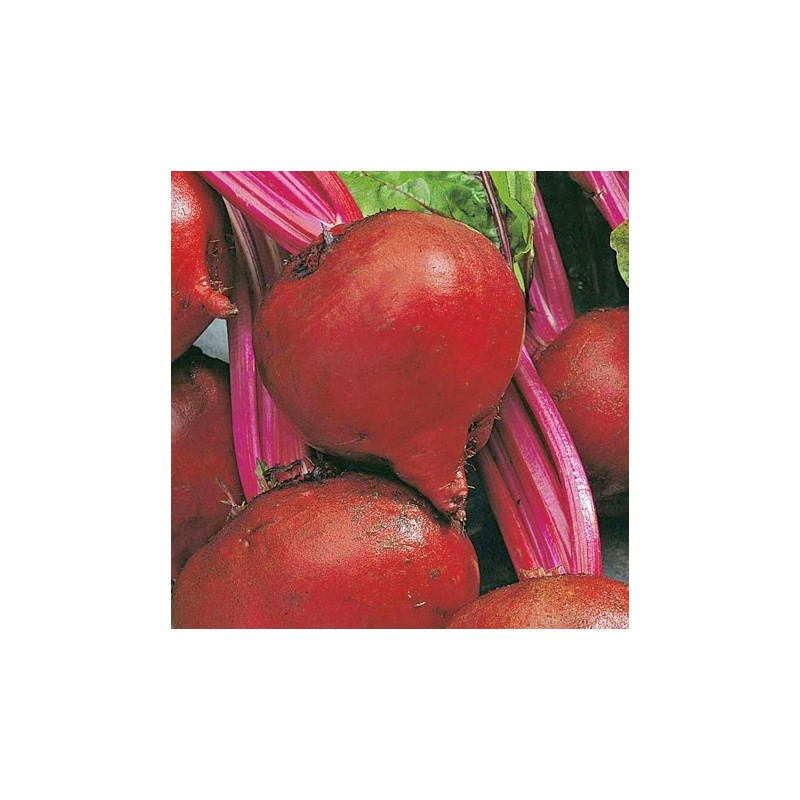 Organic - Beetroot Detroit 100 seeds