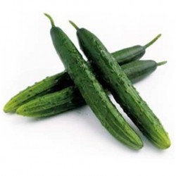 Organic - Cucumber Marketmore 25 seeds
