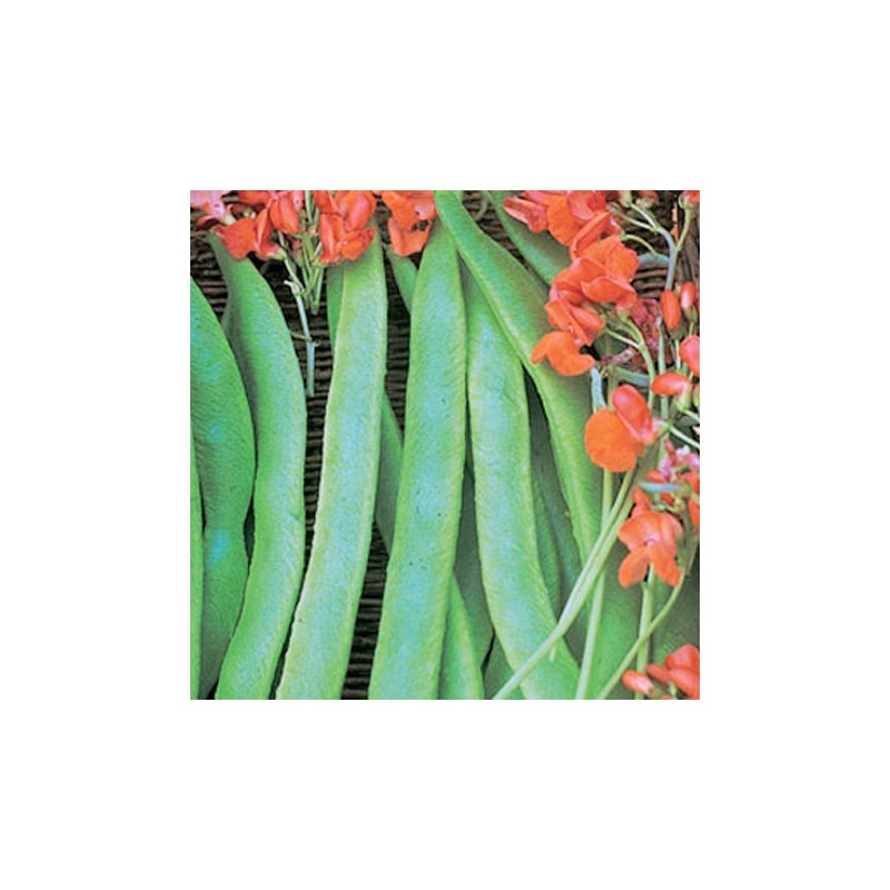 Organic - Runner Bean Lady Di 25 seeds