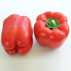 Organic - Sweet Pepper Bendigo F1 5 seeds