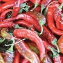 Organic - Sweet Pepper Nardello 25 seeds