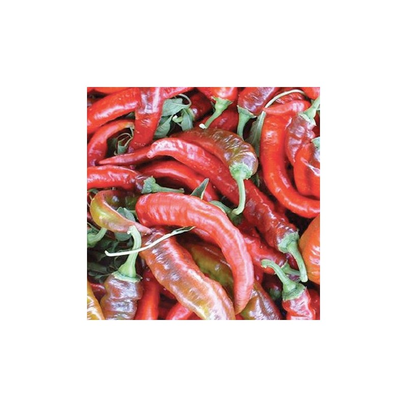 Organic - Sweet Pepper Nardello 25 seeds