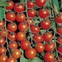Organic - Tomato Chadwick 25 seeds