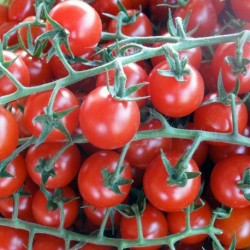 Organic - Tomato Red Cherry 25 seeds