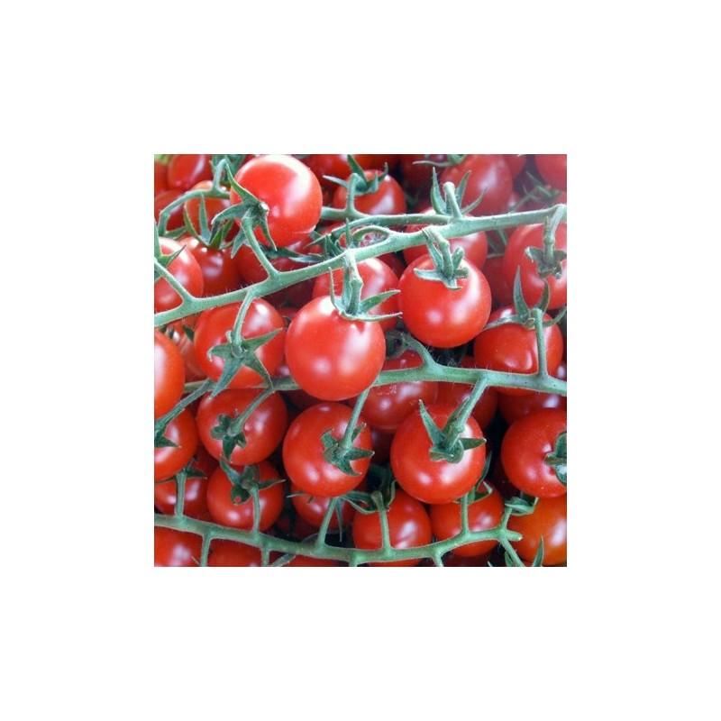 Organic - Tomato Red Cherry 25 seeds