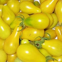 Organic - Tomato Yellow Pear 25 seeds