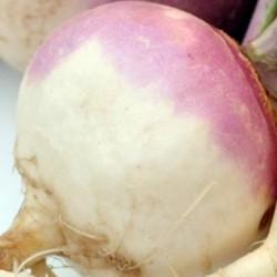 Turnip Veitches Red Globe 1000 seeds
