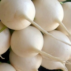 Turnip Snowball 1000 seeds