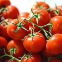 Tomato Ailsa Craig 100 seeds