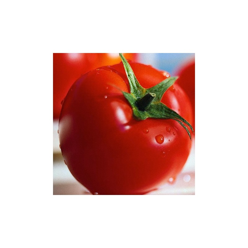 Tomato Alicante 100 seeds