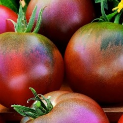 Tomato Black Russian 50 seeds