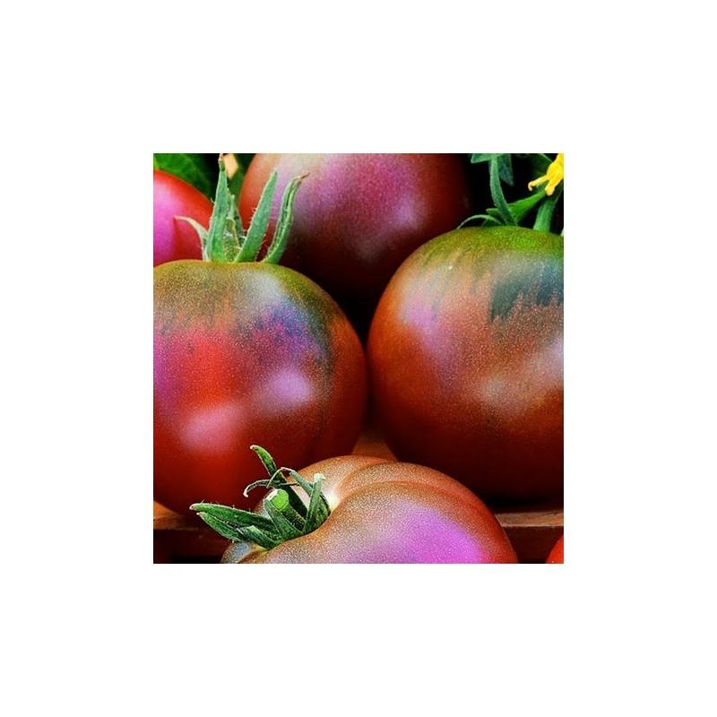 Tomato Black Russian 50 seeds