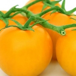Tomato Golden Sunrise 25 seeds