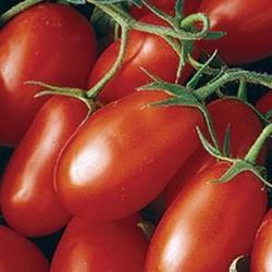 Tomato Roma VF 100 seeds