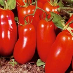 Tomato San Marzano 100 seeds
