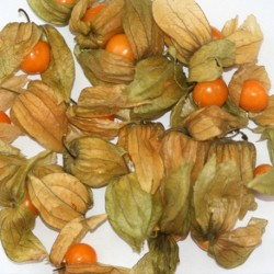 Cape Gooseberry 100 seeds