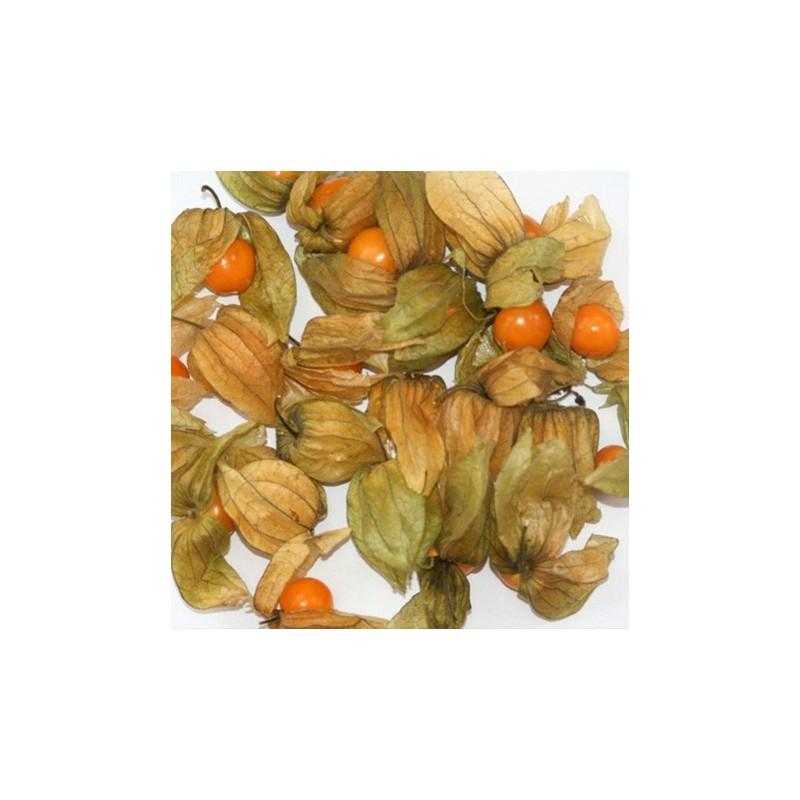 Cape Gooseberry 100 seeds