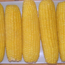 Sweetcorn Incredible Sugar Enhanced F1 Hybrid 40 seeds