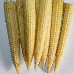 Sweetcorn Minipop F1 Hybrid 30 seeds