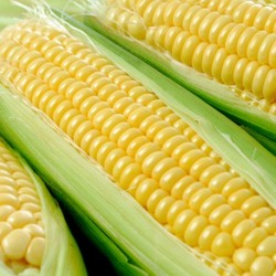 Sweetcorn Tasty Gold Supersweet F1 Hybrid 40 seeds
