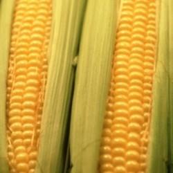 Sweetcorn Goldcrest F1 40 seeds