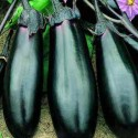 Aubergine Moneymaker F1 20 seeds