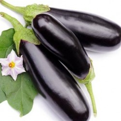 Aubergine Long Purple 200 seeds