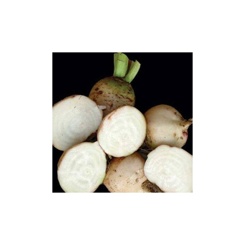 Beetroot White Detroit  200 seeds