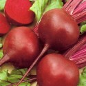 Beetroot Boltardy 300 seeds