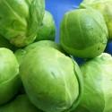 Brussels Sprout Darkmar 21 250 seeds