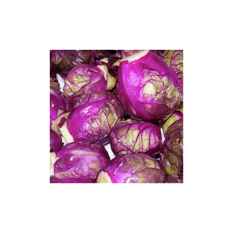 Brussels Sprout Red Bull 100 seeds