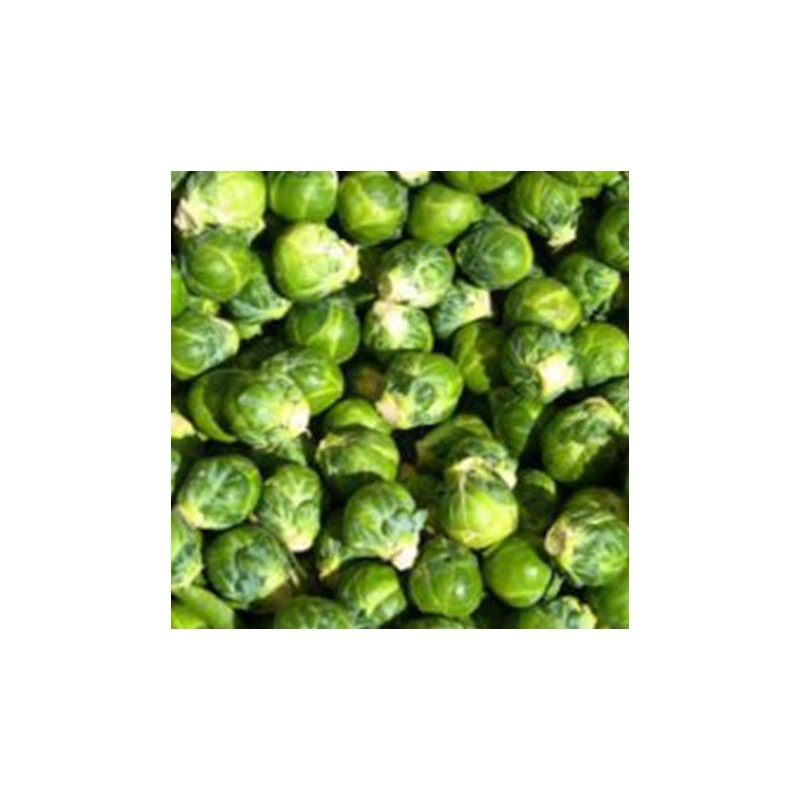 Brussels Sprout Evesham Special 250 seeds