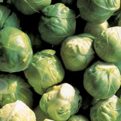 Brussels Sprout Crispus F1 20 seeds