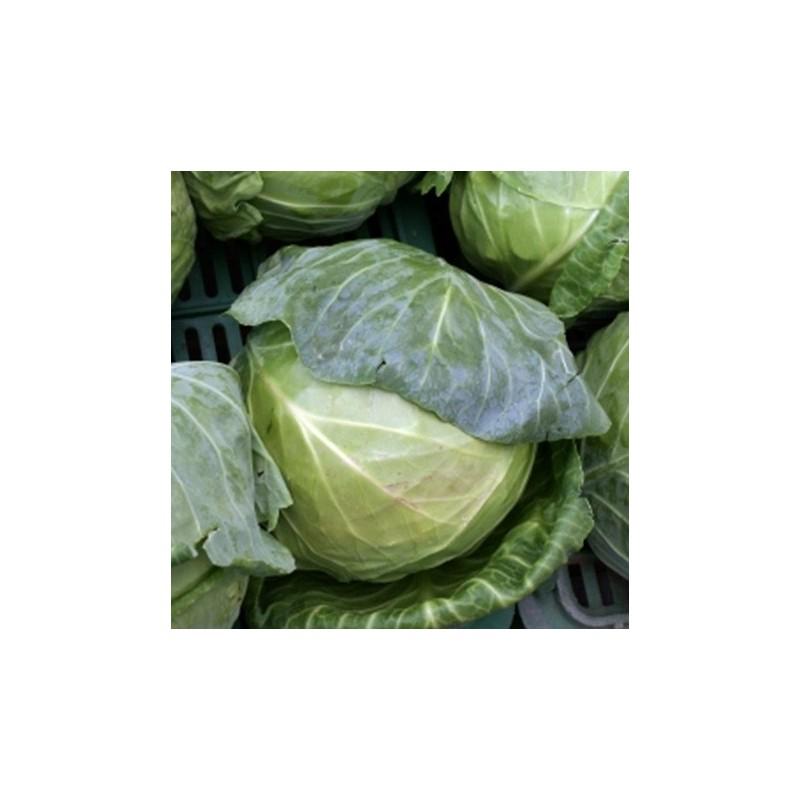 Cabbage April 400 seeds