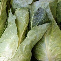 Cabbage Durham Early 400 seeds