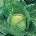 Cabbage Kilaton F1 20 seeds
