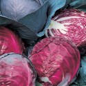 Cabbage Red Drumhead 500 seeds